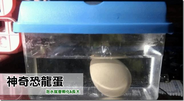 【恐龍玩具】神奇恐龍蛋 泡水就會孵化長大