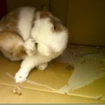 【寵物】兔子狂咬紙箱的原因?