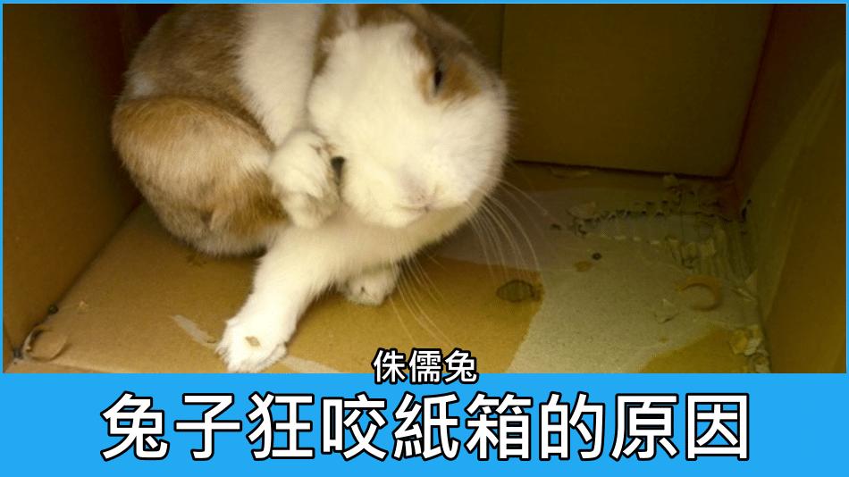 兔子狂咬紙箱的原因?